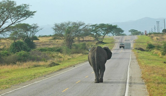 travel-weekly-elephant
