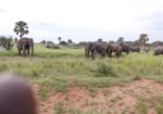 Kjong Uganda Safaris
