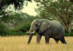 Mukwano Safaris