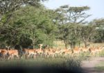 Naturetrack Expeditions