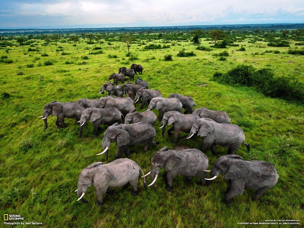 File:Kaziranga-National-Park1.jpg - Wikimedia Commons